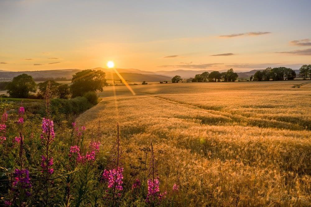 Fields of Gold, Avoca, Co. Wicklow