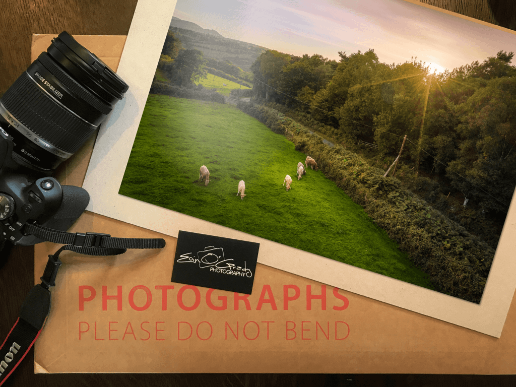 Photo print of cows in a field in Ireland.